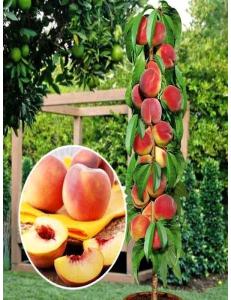 Колоновидный персик Медовый в Евпатории