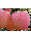 Яблоня Фуджи в Евпатории